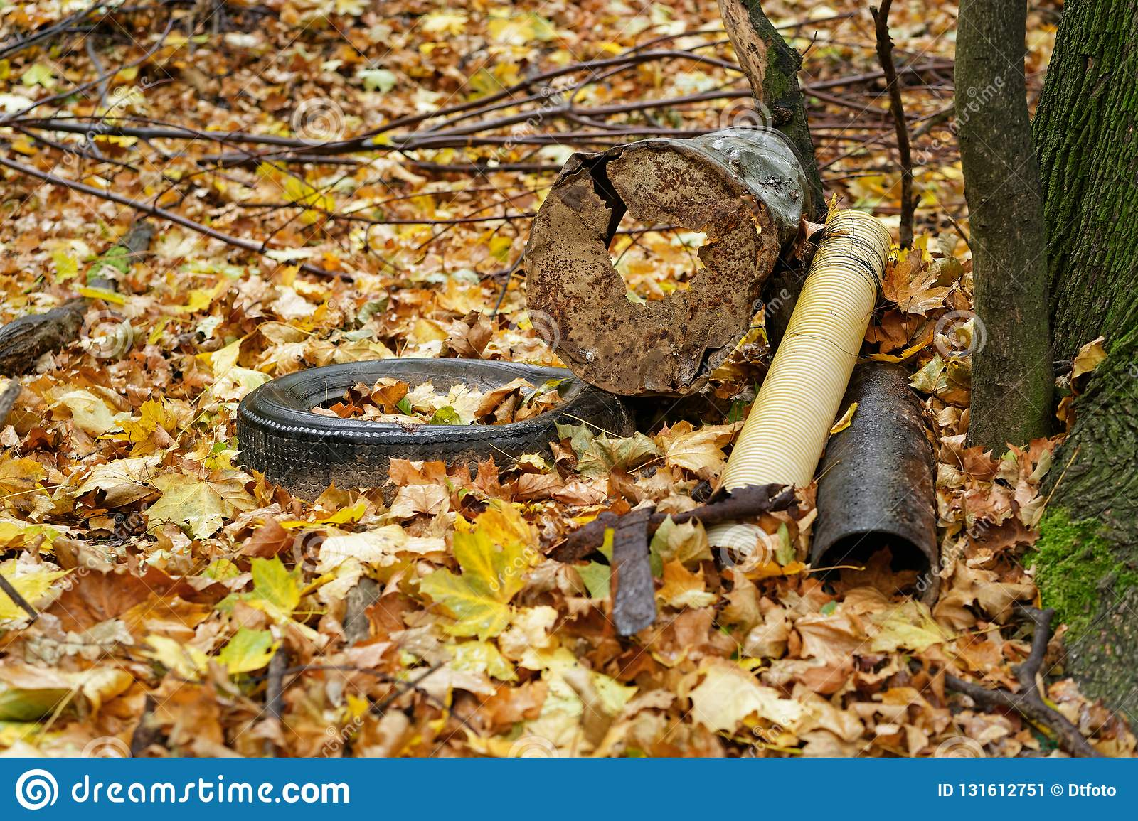 Garbage deposit in the forest on a tree, car tires, metal scrap, components, autumn leaves cover the ground