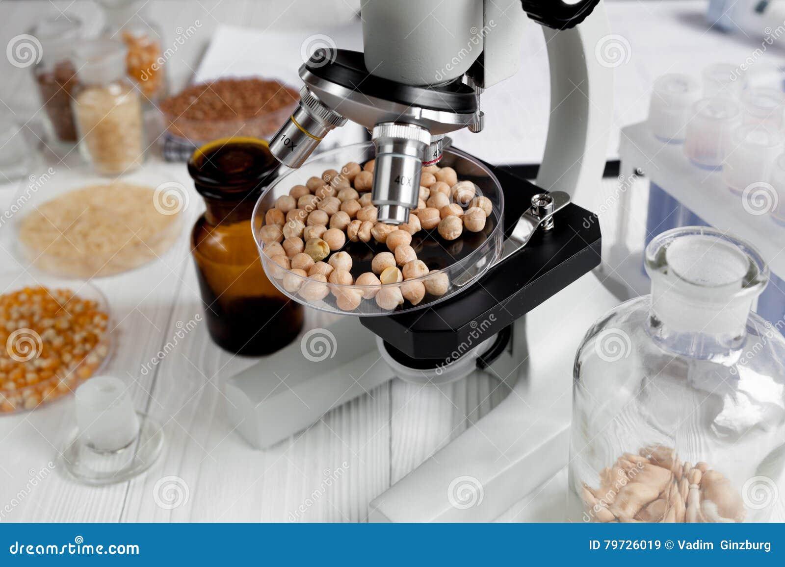 Garbanzo sano del análisis de alimentos del concepto en laboratorio nadie