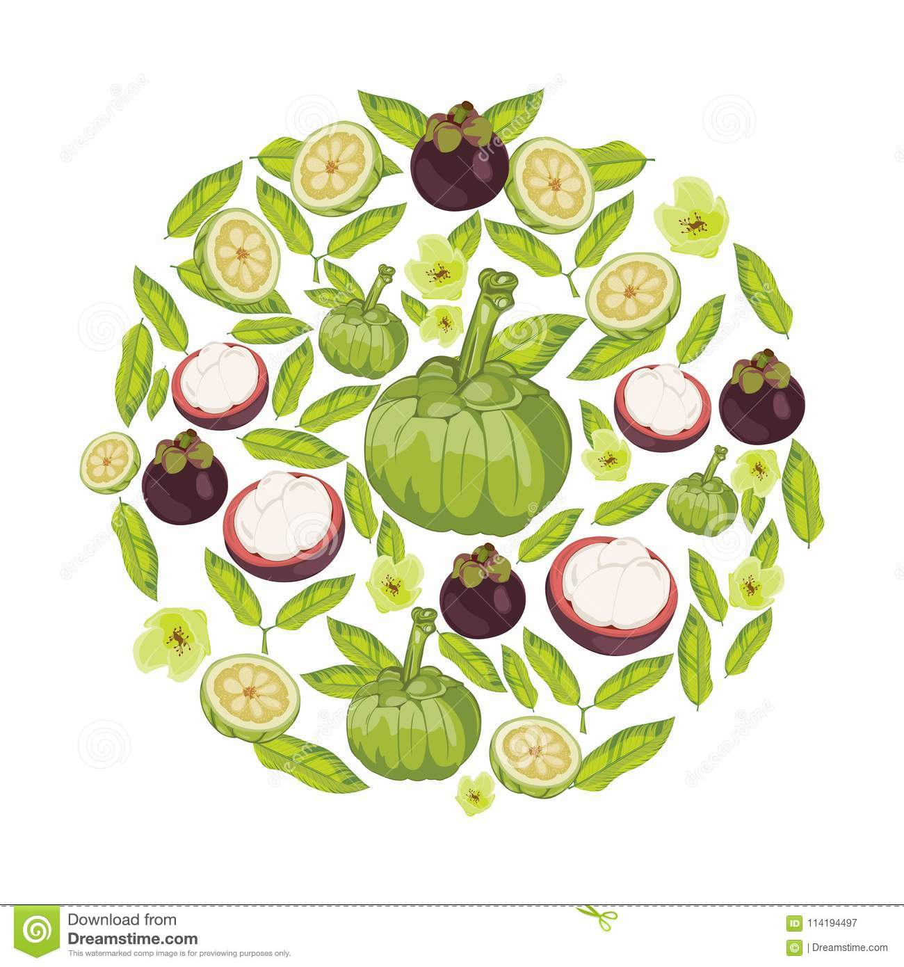 Garcinia Cambogia Fruit Vector Stock Vector Illustration Of Food