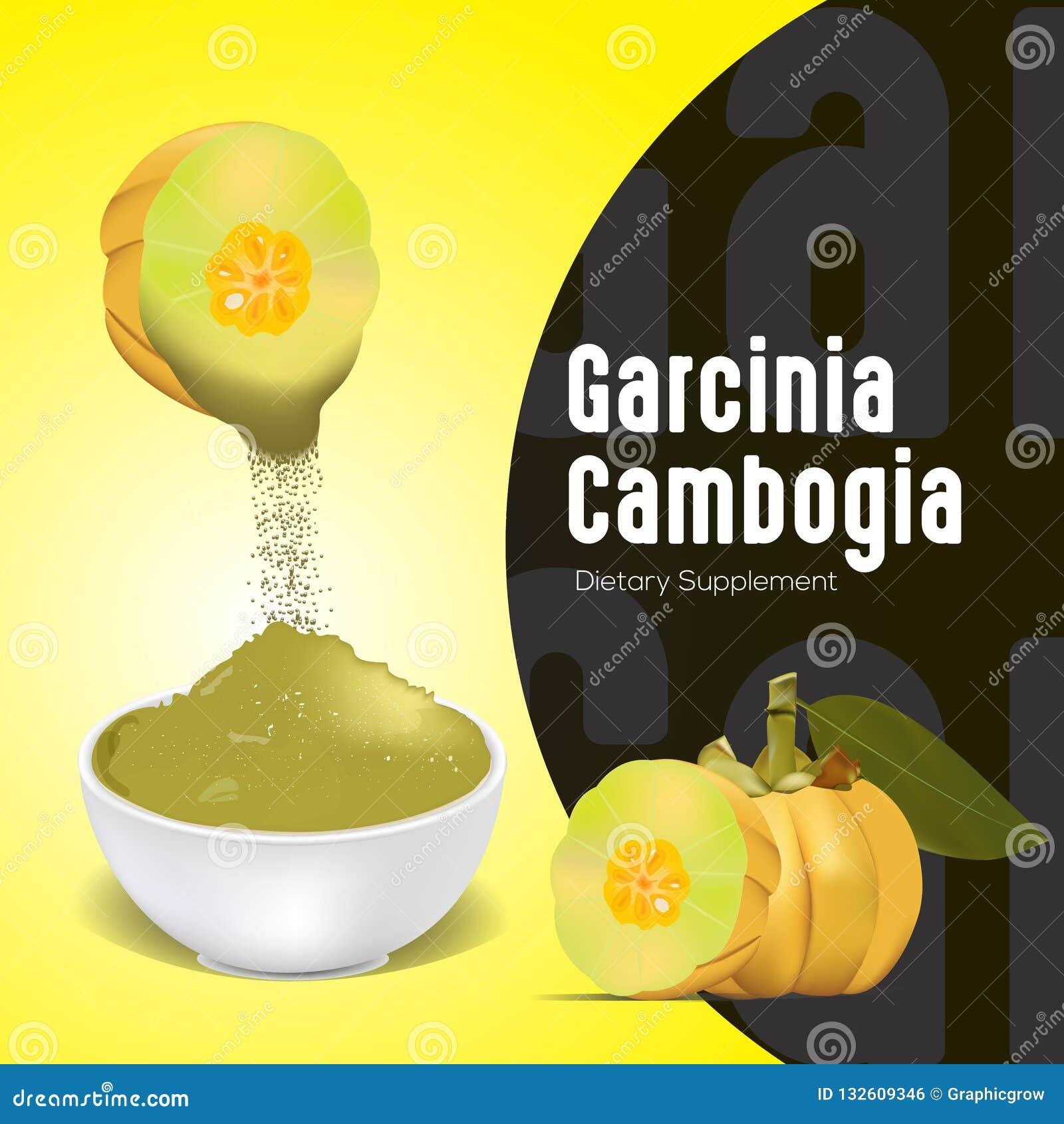 Garcinia Cambogia Fruit Powder For Supplement Stock Vector Illustration Of Fruit Cambogia 132609346