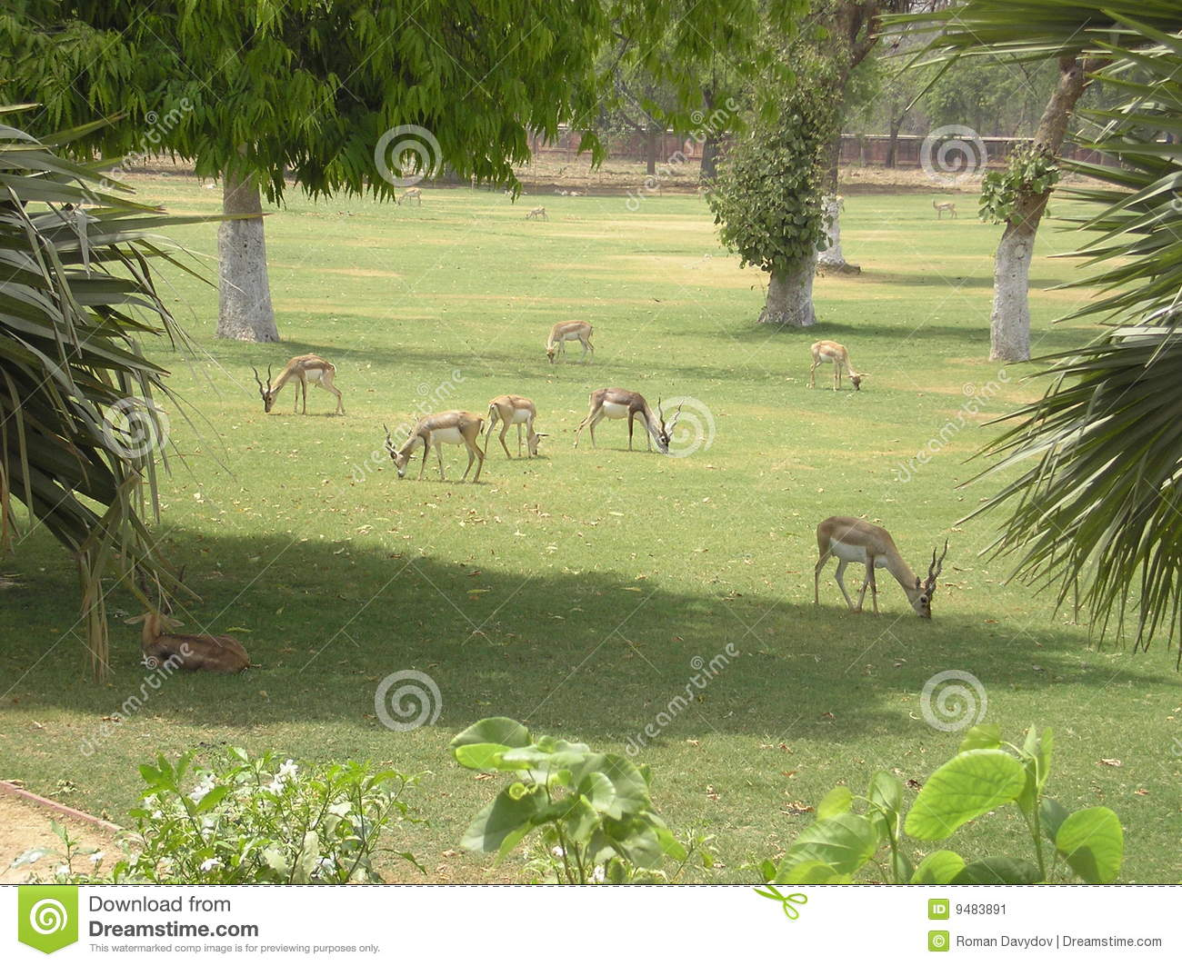 garden with animals stock image image 9483891