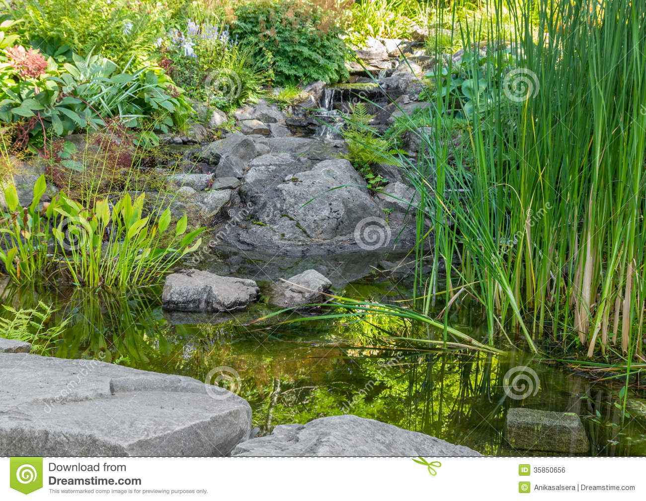 garden with aquatic plants pond and decorative stones
