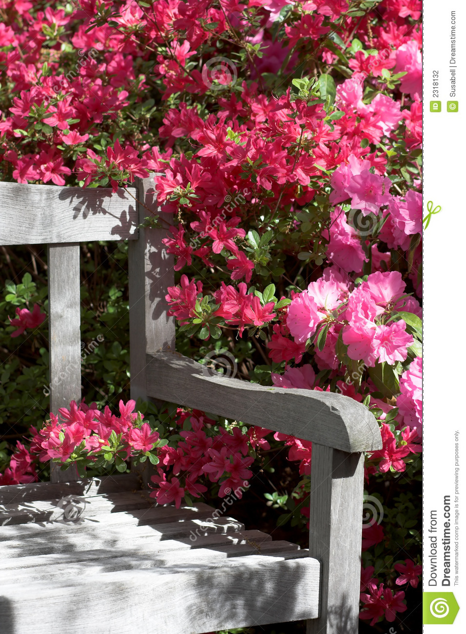 Garden bench and flowers stock photo. Image of fresh ...