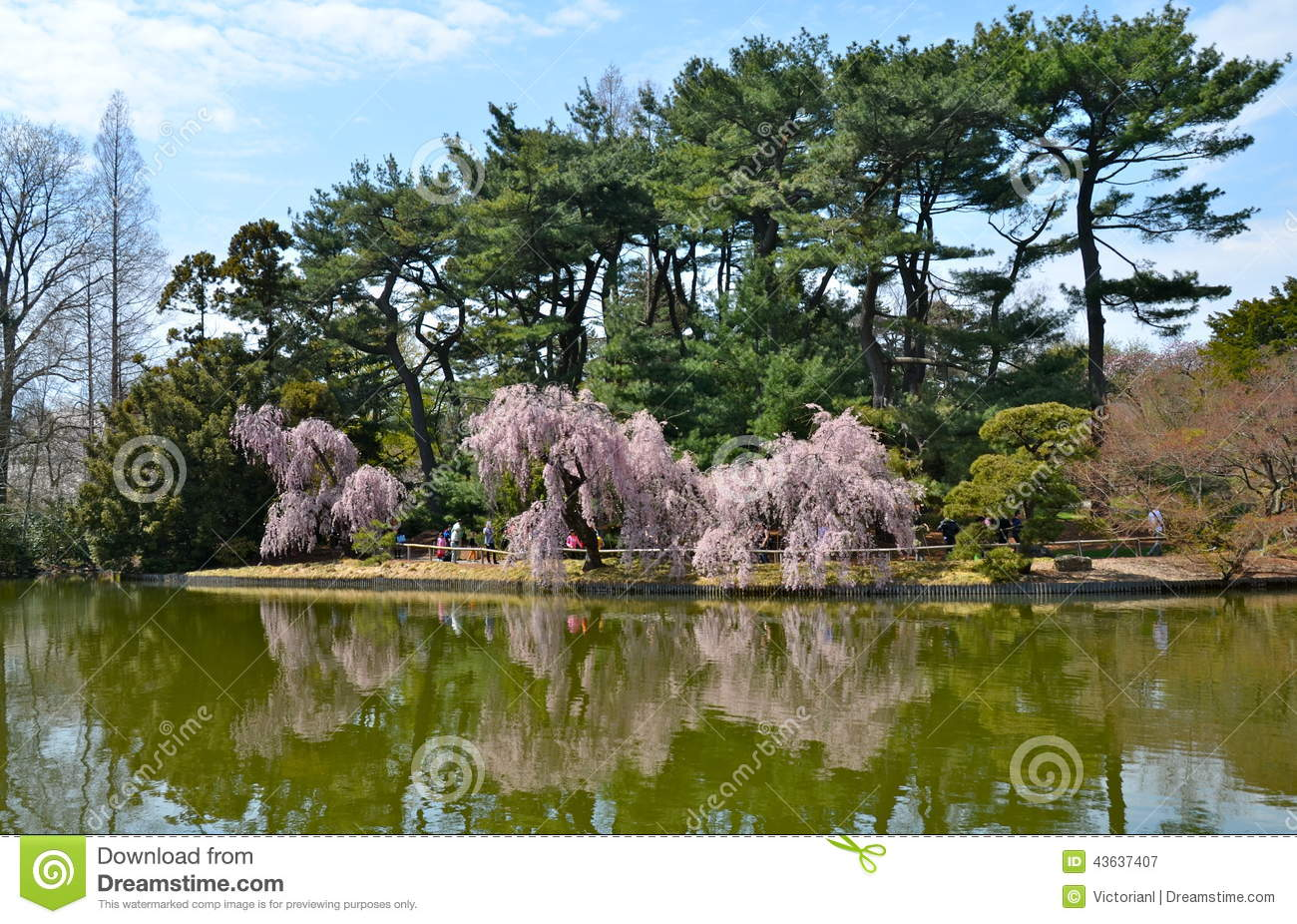 Garden At The Brooklyn Botanic Gardens On A Sunny Spring Day Stock Photo Image 43637407