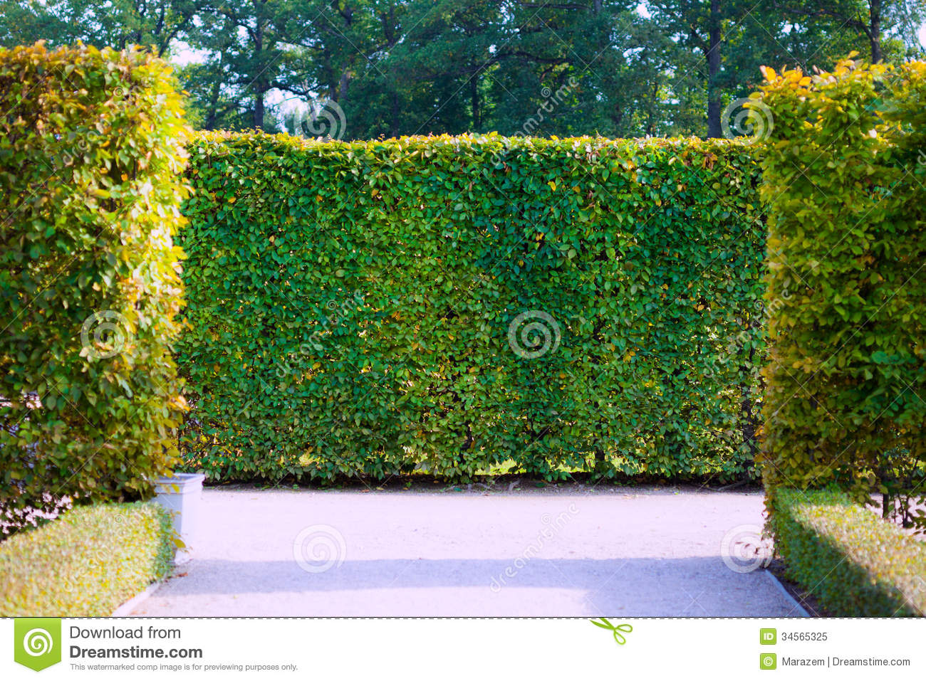 Awesome Royalty Free Stock Photo. Download Garden Bushes ...