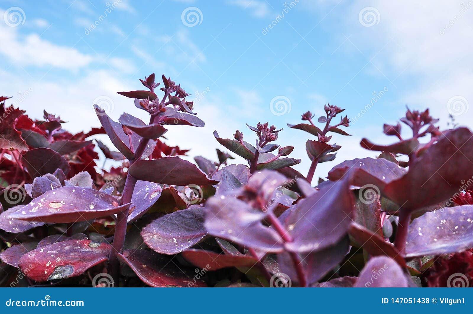 Garden Center para a venda das plantas Aqui voc? pode comprar muitas variedades de plantas verdes: v?rias flores, abeto, abeto ve