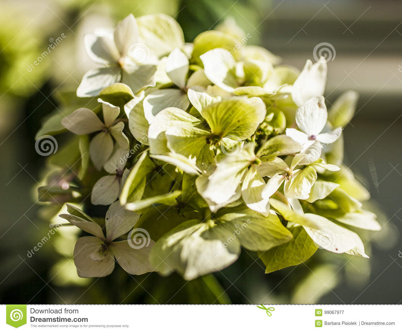The garden a closeup of a bunch of pale yellow flowers stock download the garden a closeup of a bunch of pale yellow flowers stock image mightylinksfo