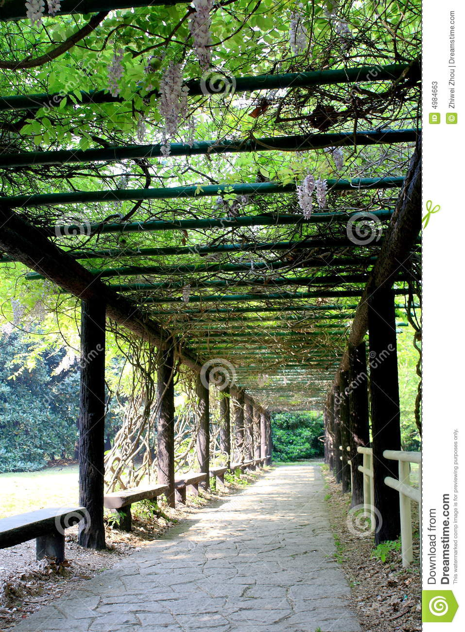 Garden covered by a wistaria plant stock image image for Jardin couvert