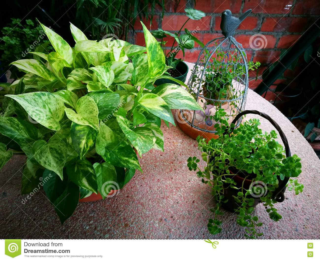 Garden Decor Items With Green Plants