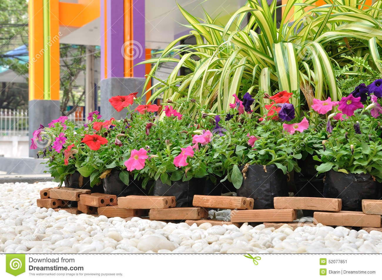 Garden Decoration With White Rock And Flowers Stock Image Image Of