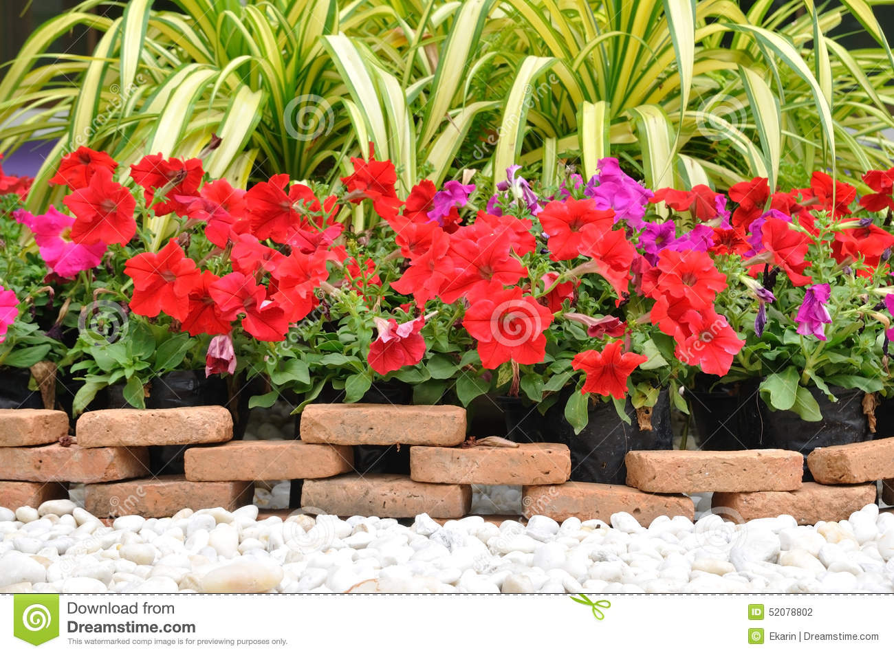 Garden Decoration With White Rock And Flowers Stock Photo Image Of
