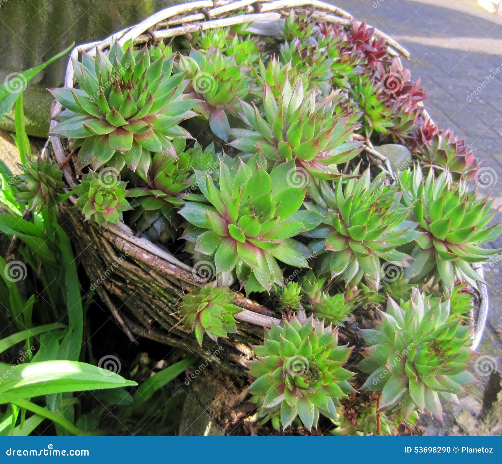 Garden Design Cactus Stock Photo Image 53698290