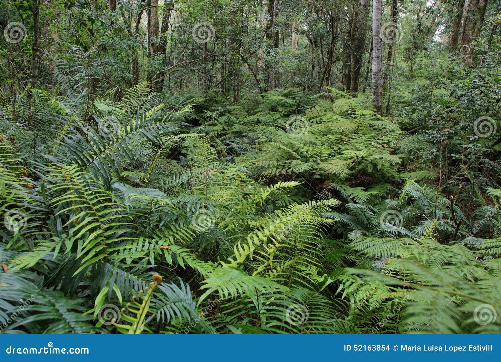 Garden Of Eden Stock Photo Image Of Park Landscape 52163854