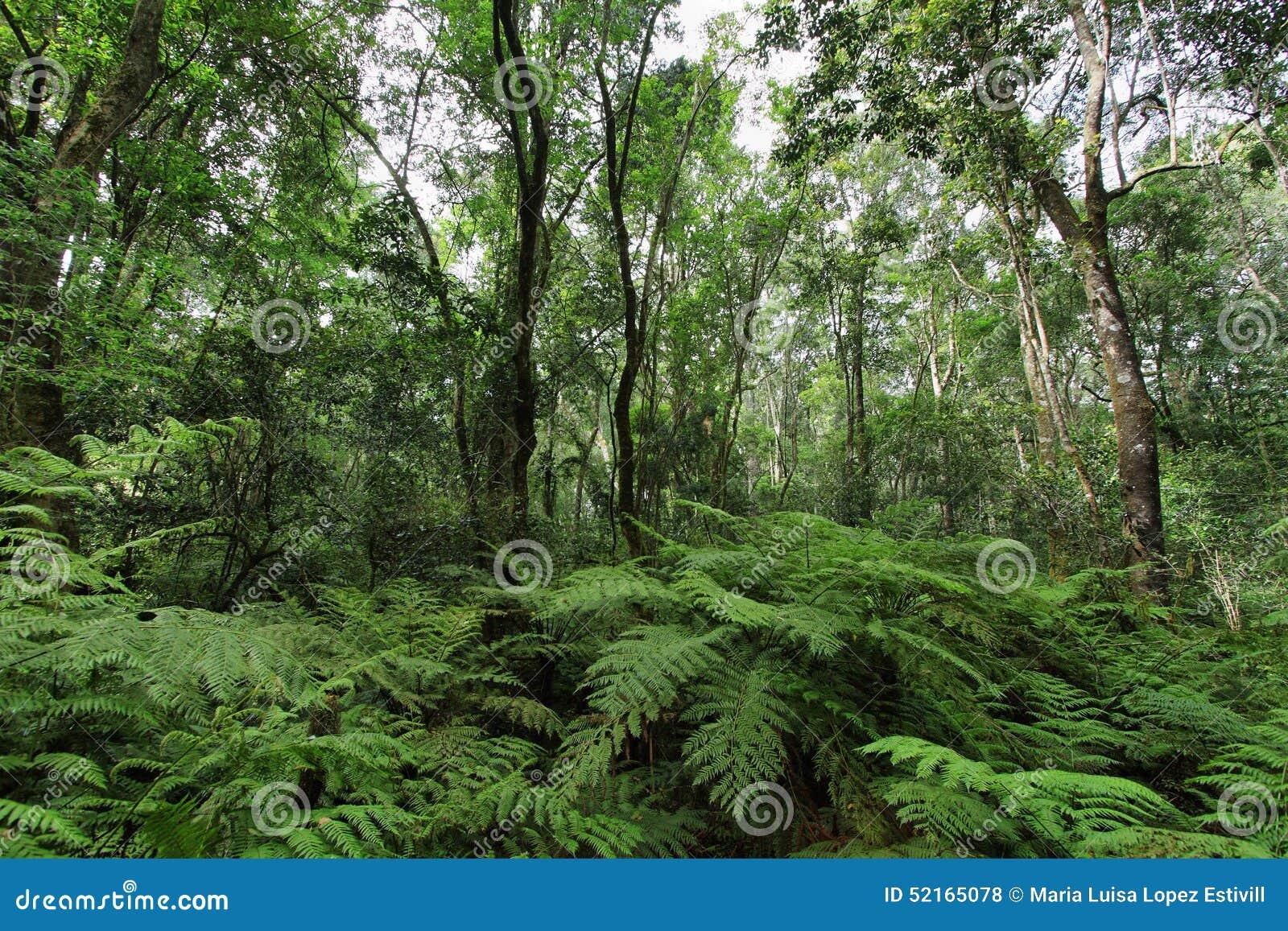 Garden Of Eden Stock Photo Image 52165078