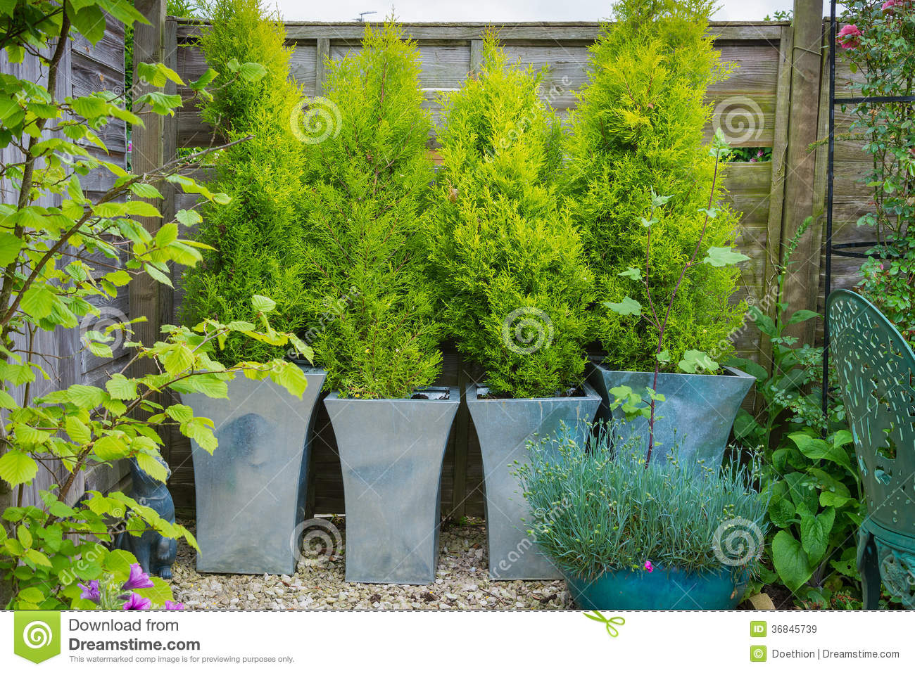 Garden With Evergreen Trees In Containers Royalty Free Stock