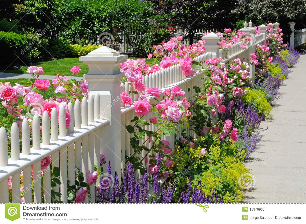 garden fence with pink roses stock photo image 16976930