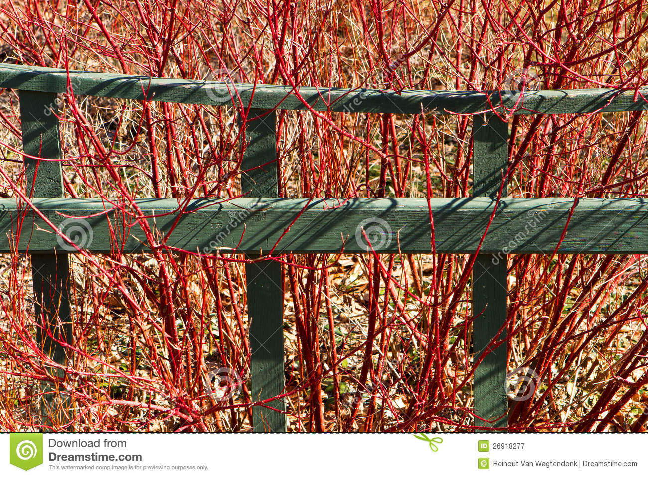 Garden fence and red twig dogwood royalty free stock photography dogwood fence baanklon Gallery