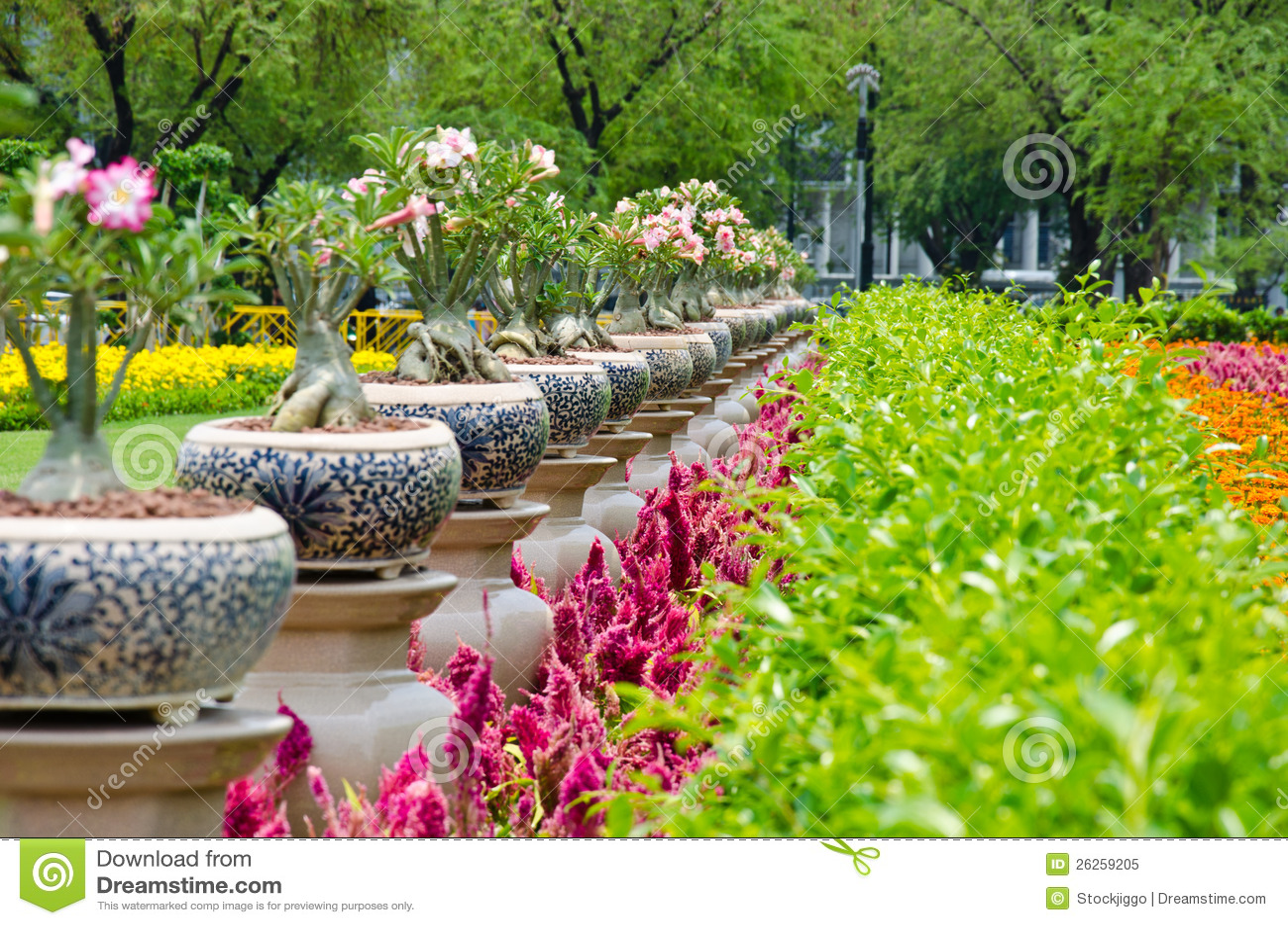 Garden Flower In Bankok Thailand Stock Image