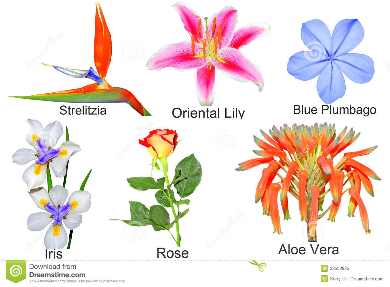 Garden Flowers Names | Alices Garden