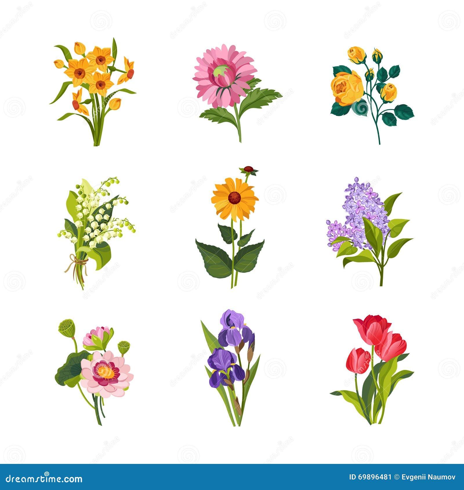 Garden Stock Image Image Of Design: Garden Flowers Collection Stock Vector
