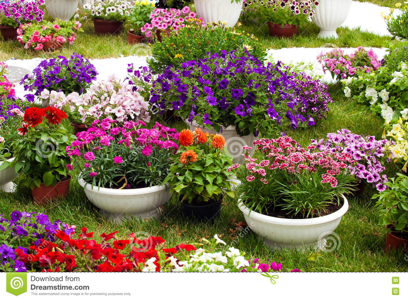 Garden Flowers Of Different Colors In Pots Stock Image Image Of