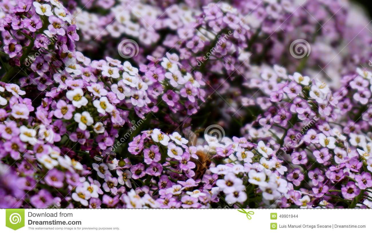 white and purple flowers  flower, Beautiful flower