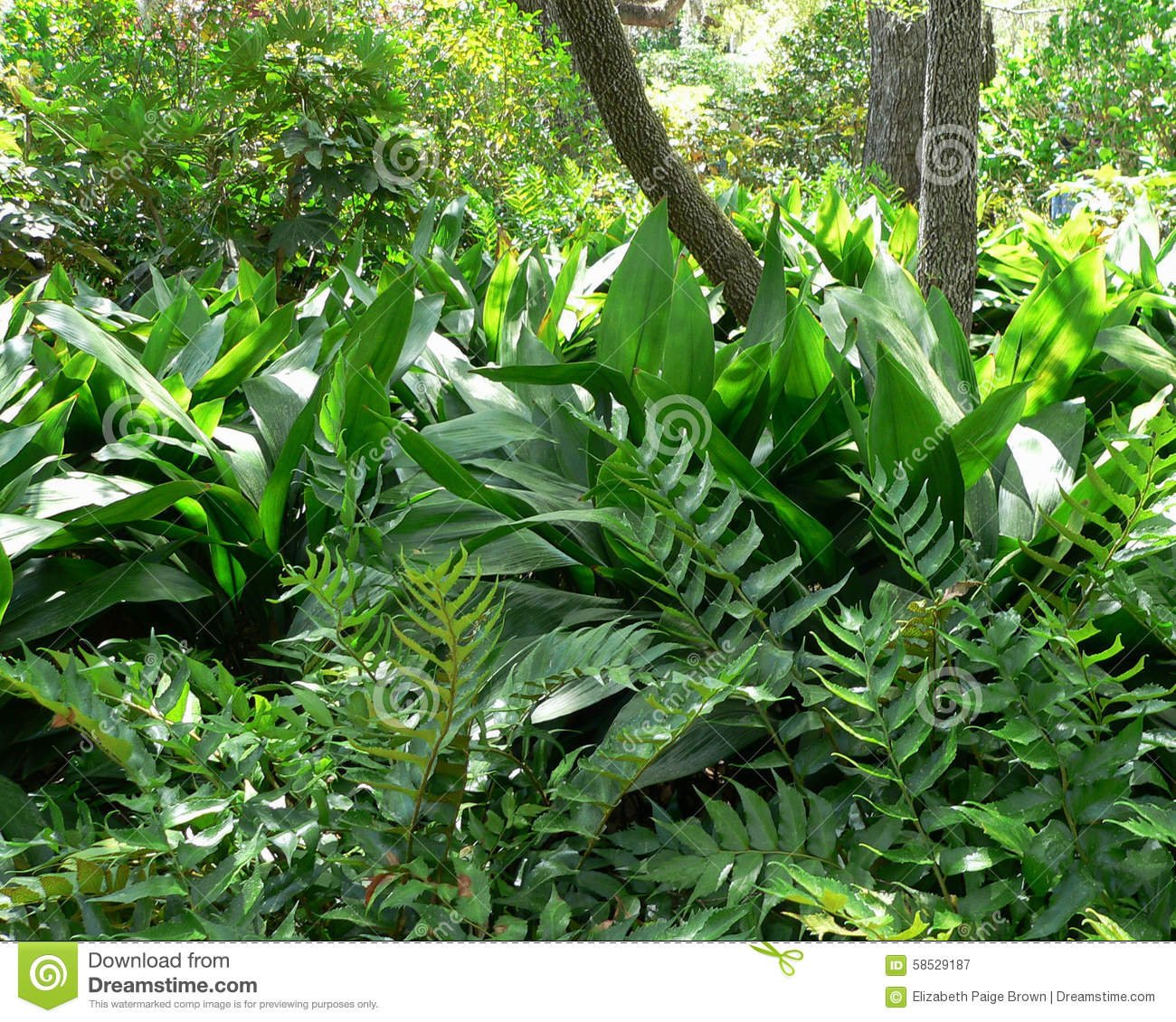 Garden foliage stock image. Image of morning, spot, brookgreen ...