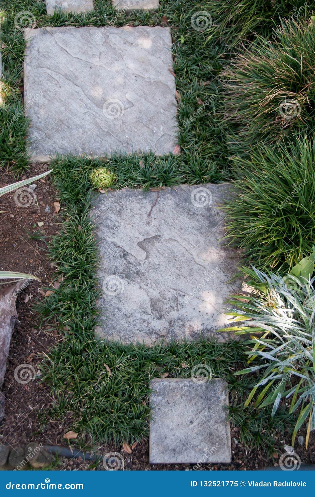 Garden footpath and grass