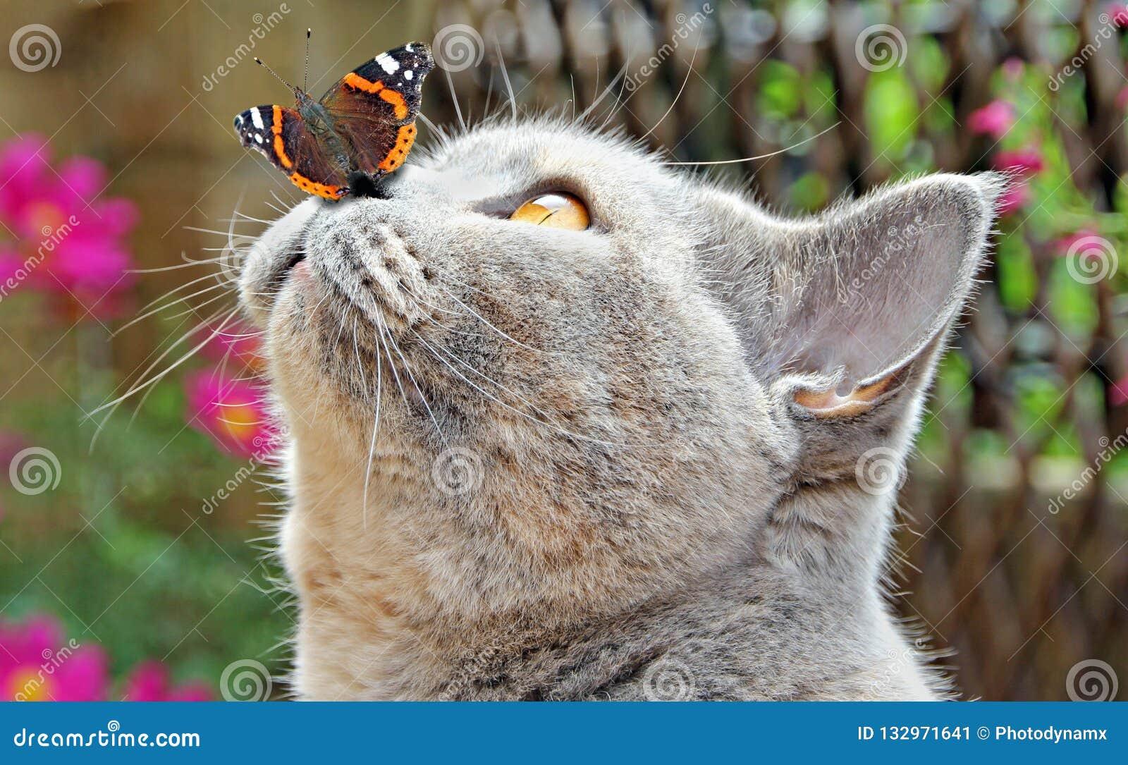Garden friends butterfly on nose of cat