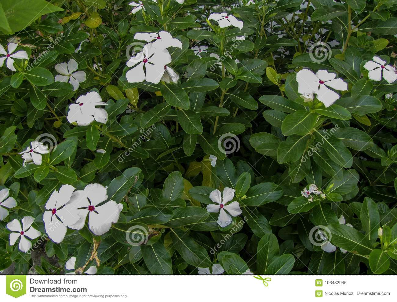 A Garden Full Of White Tropical Flowers Stock Photo Image Of