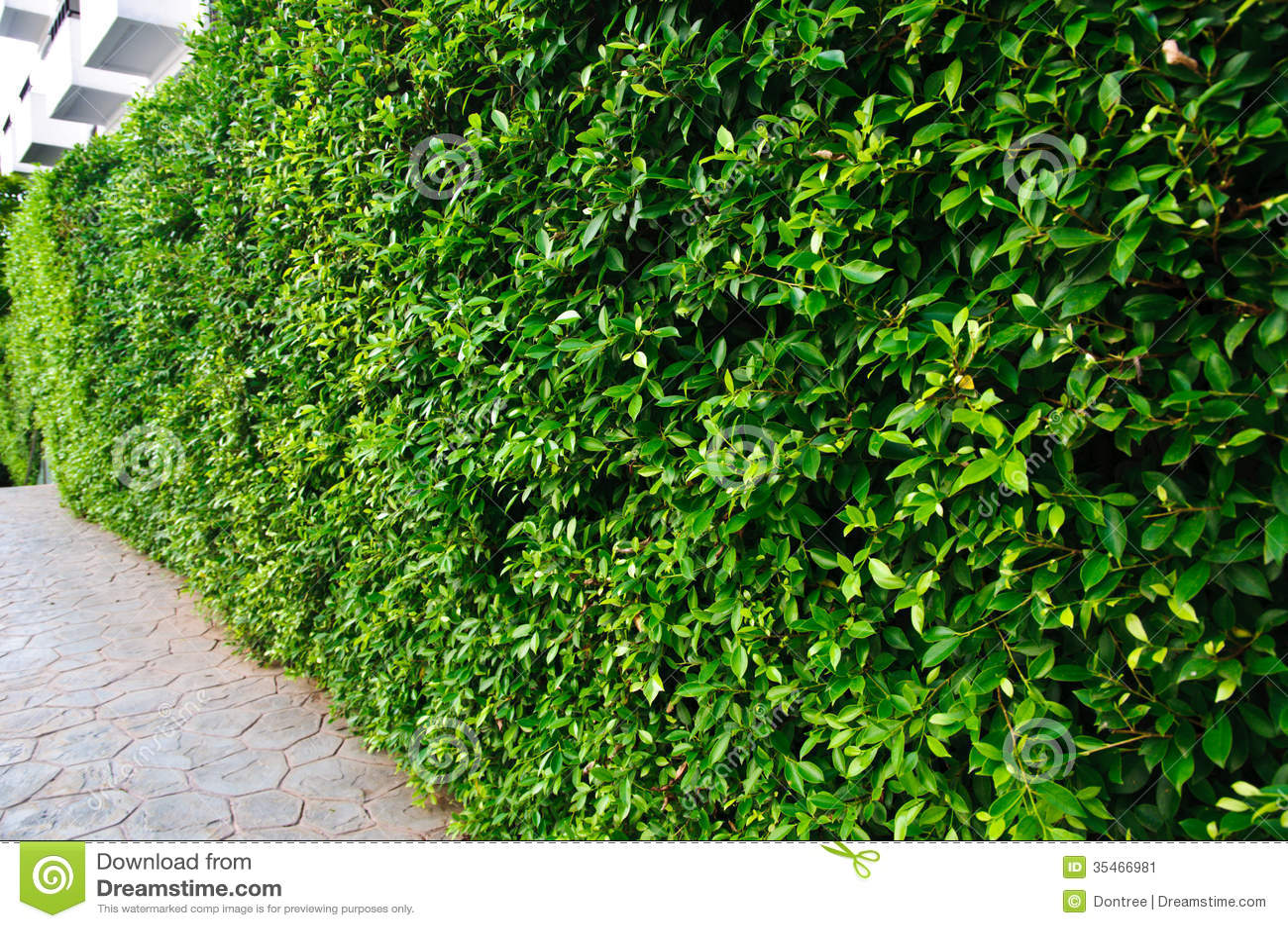Garden garden bush background stock image image 35466981 for Arbustos de jardin nombres