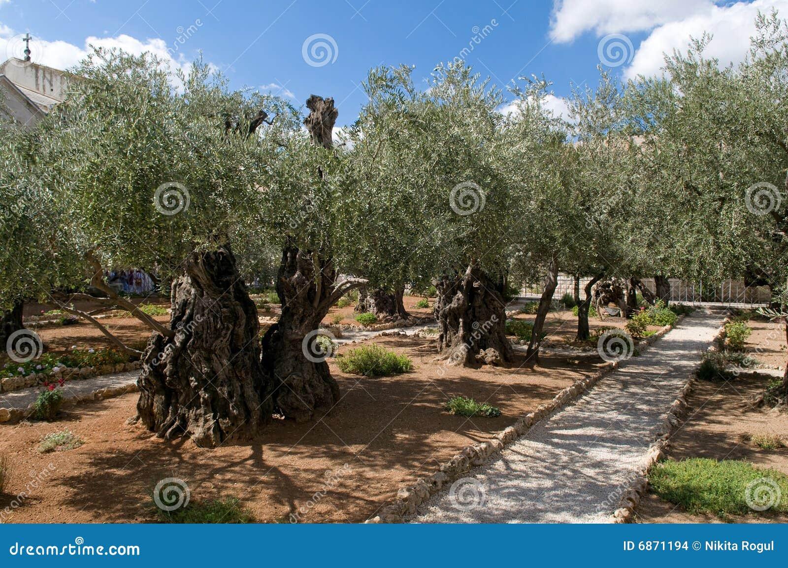 Garden Of Gethsemane Jerusalem Stock Images Image 6871194