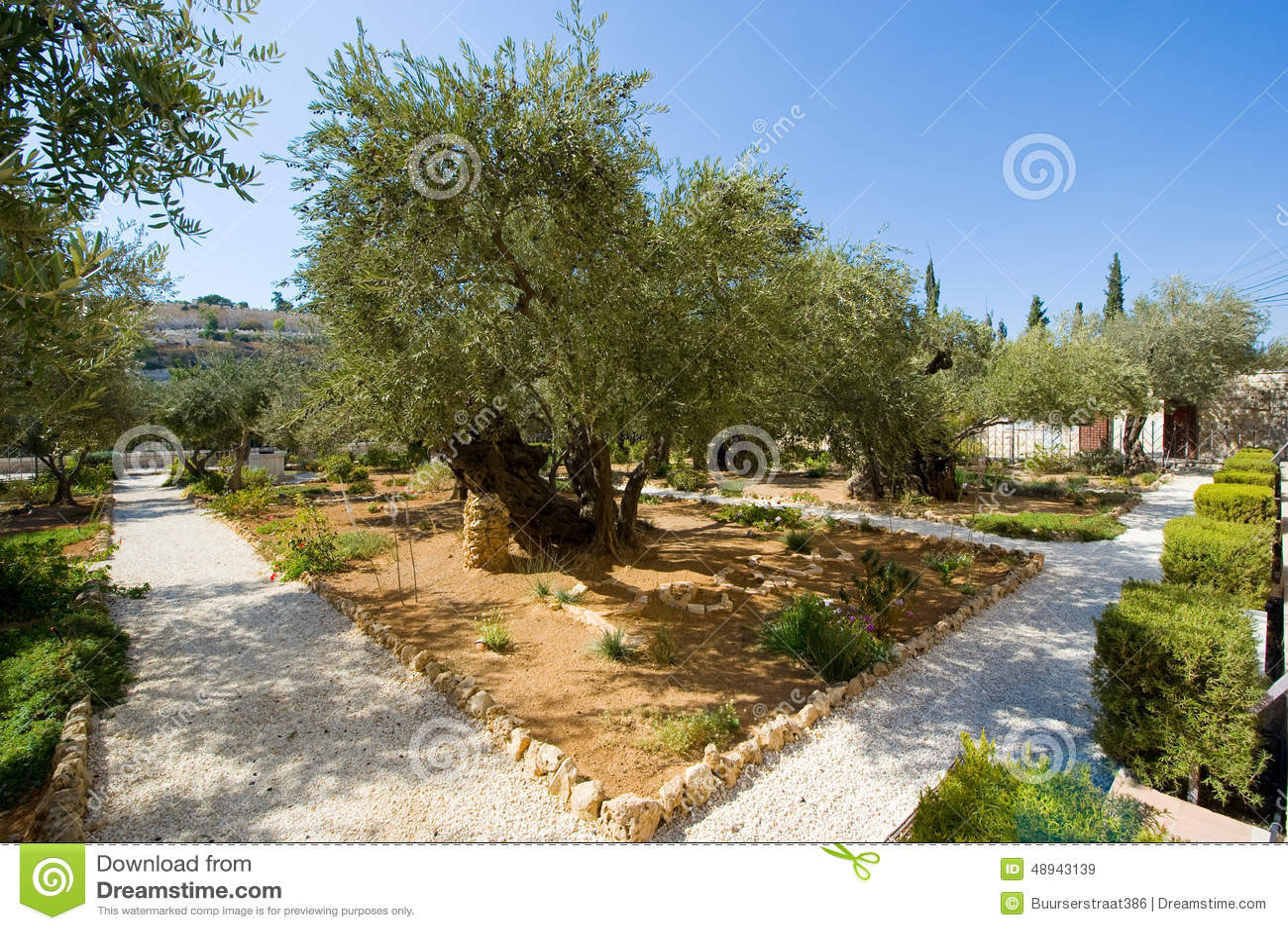 Garden of Gethsemane stock image. Image of apostles, olives - 48943139