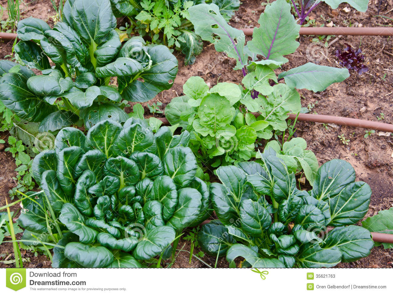 Garden Of Greens Stock Photos Image 35621763
