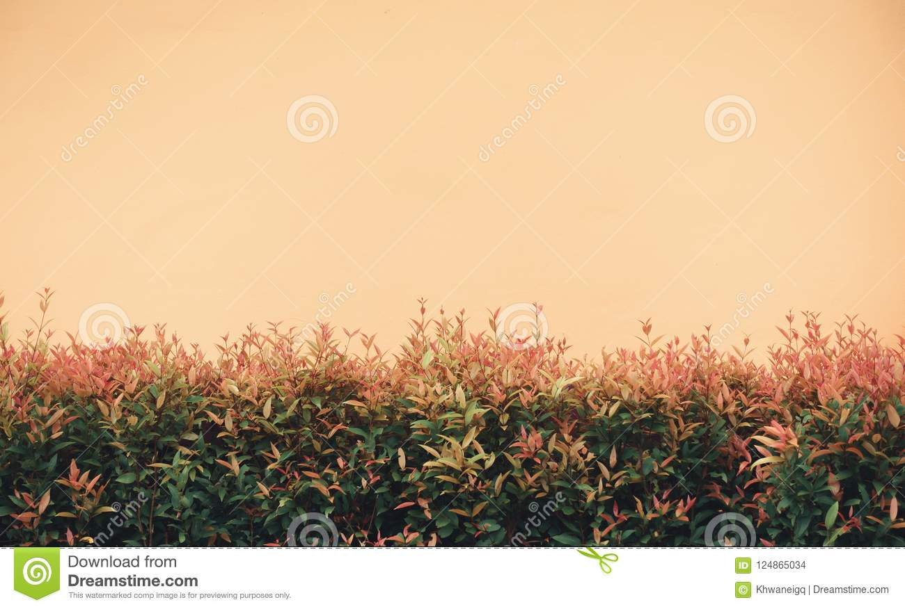 Garden Home And Wall Decoration, Abstract Background Stock Photo ...