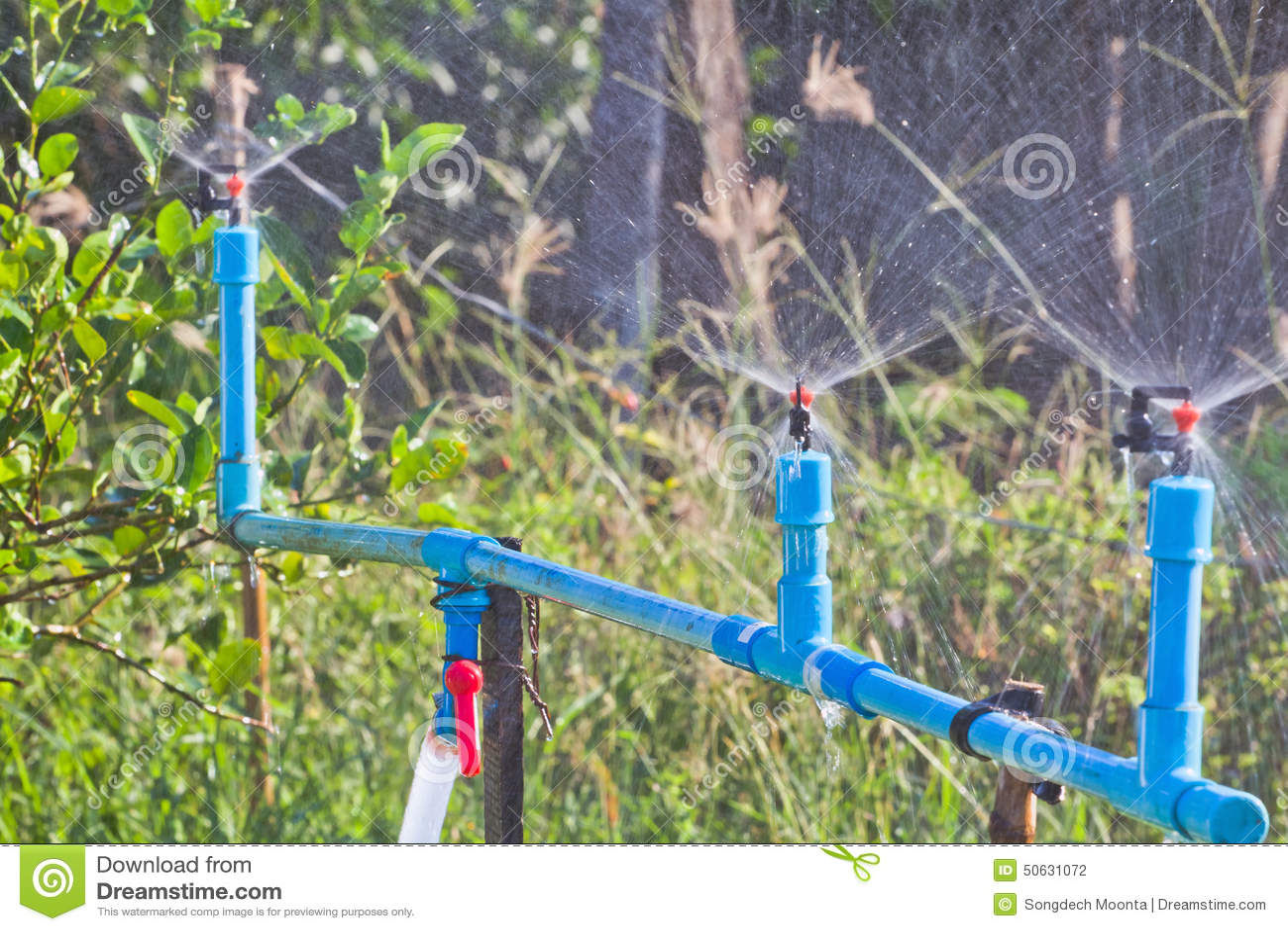 Garden Irrigation Stock Photo. Image Of Healthy Irrigation - 50631072