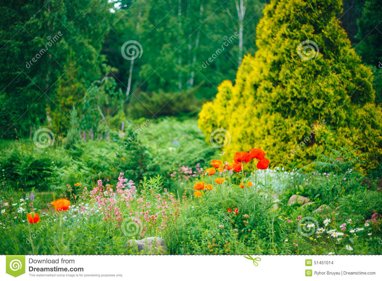 Flower garden and landscaping royalty free stock photo for Green plants for flower beds