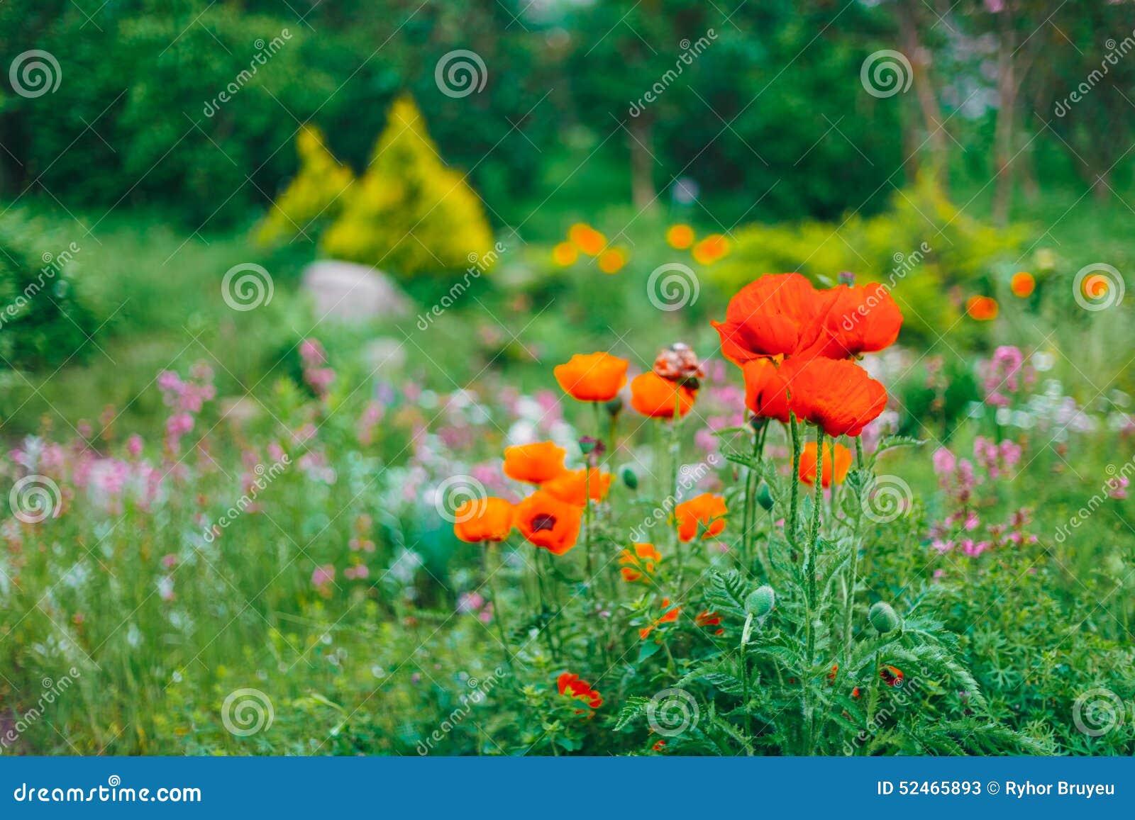 Garden Landscaping Design Flower Bed Green Trees Stock