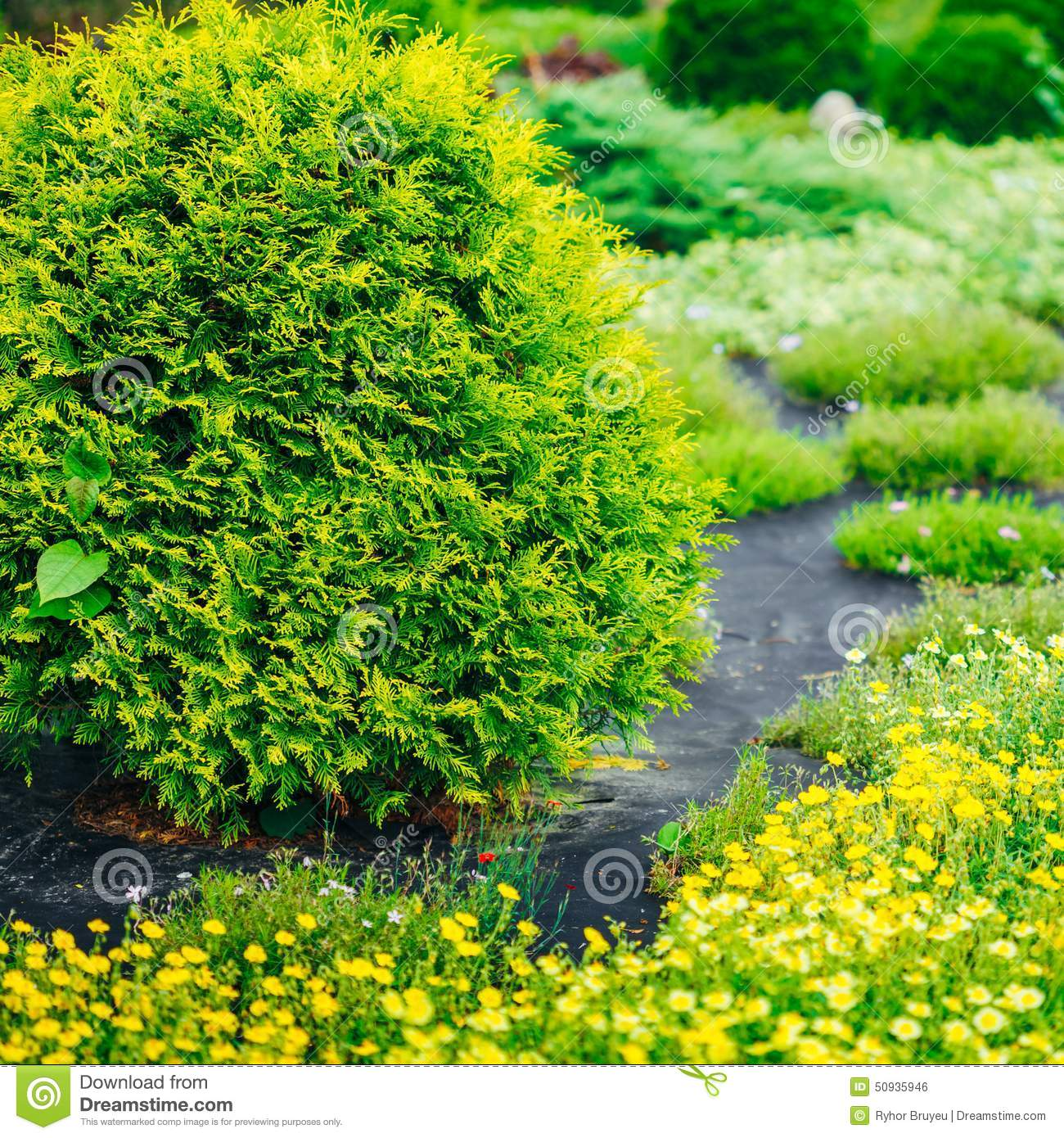 Garden Landscaping Design. Flower Bed, Green Trees Stock ...