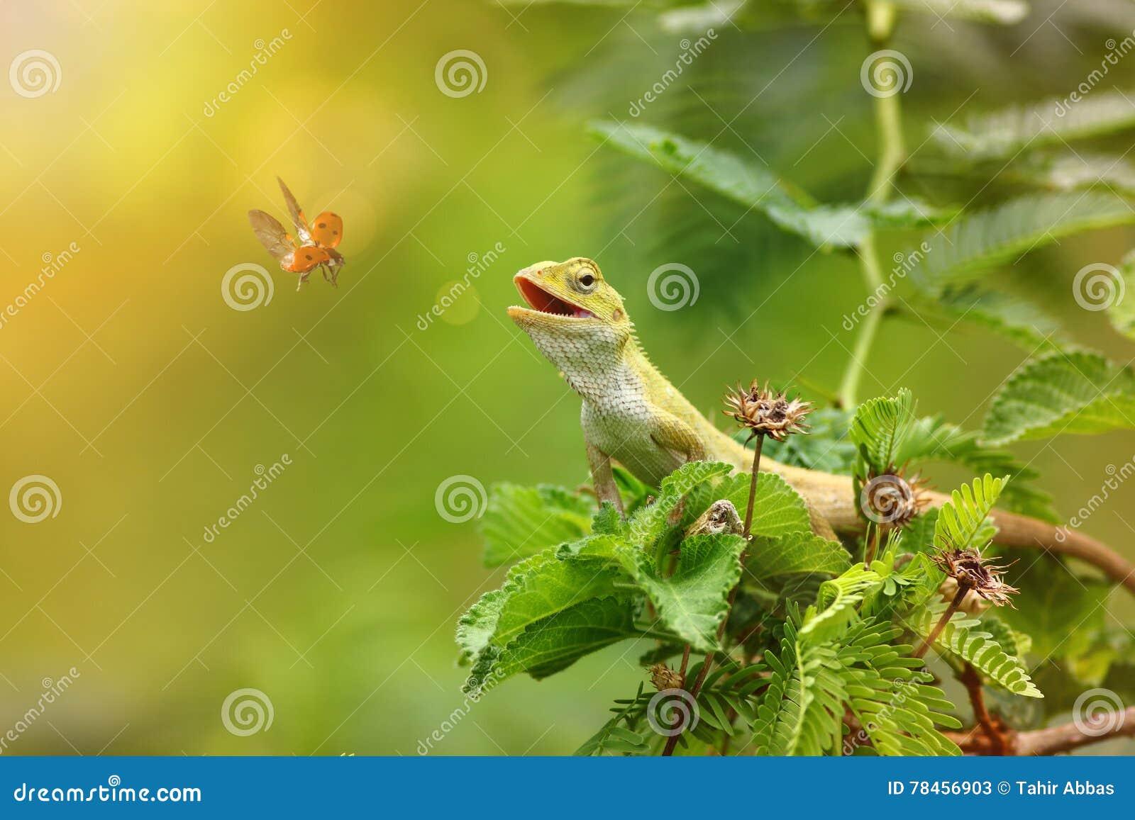 The garden lizard
