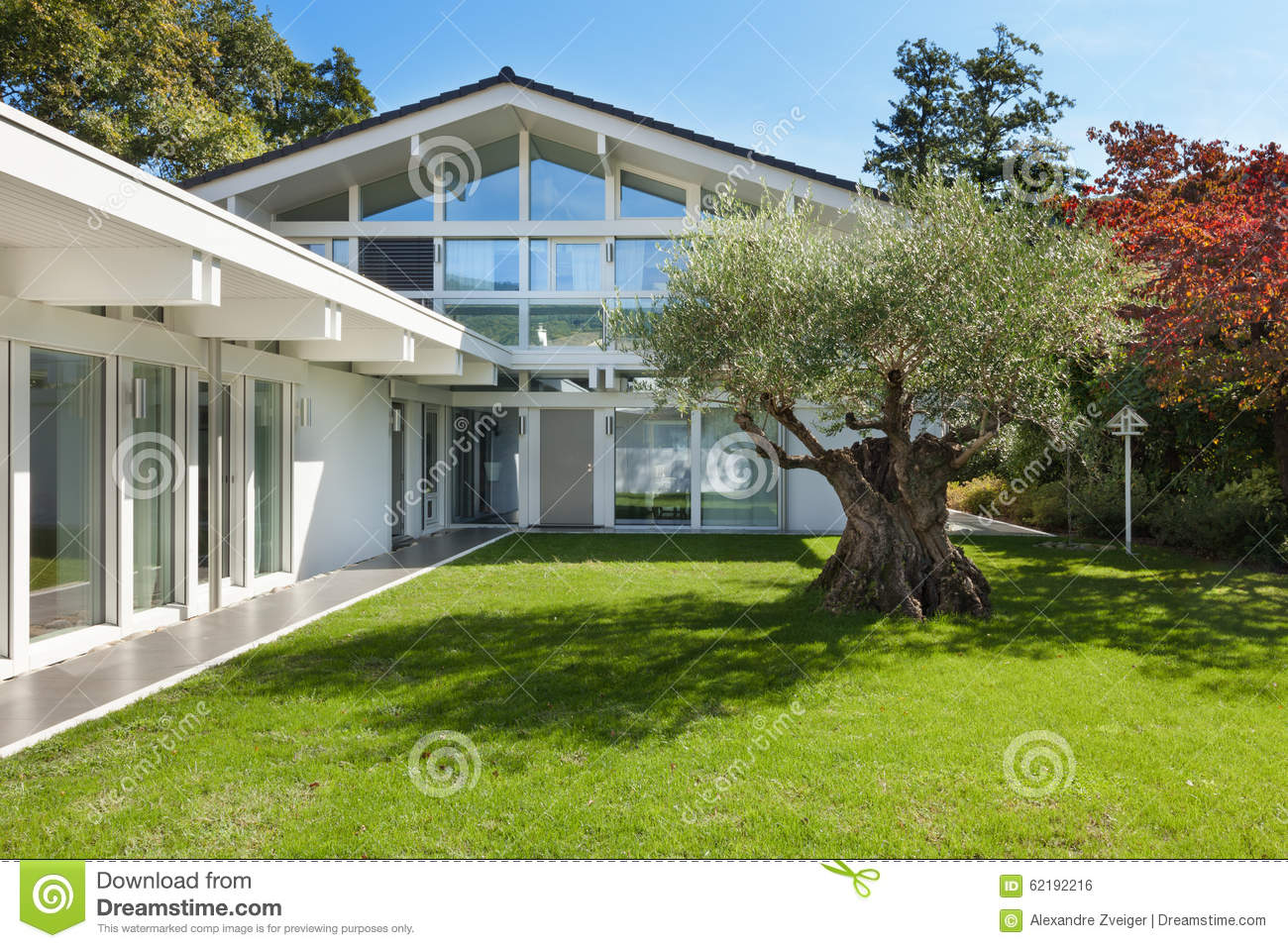 Garden of a modern house with olive tree stock photo for Modern house with garden
