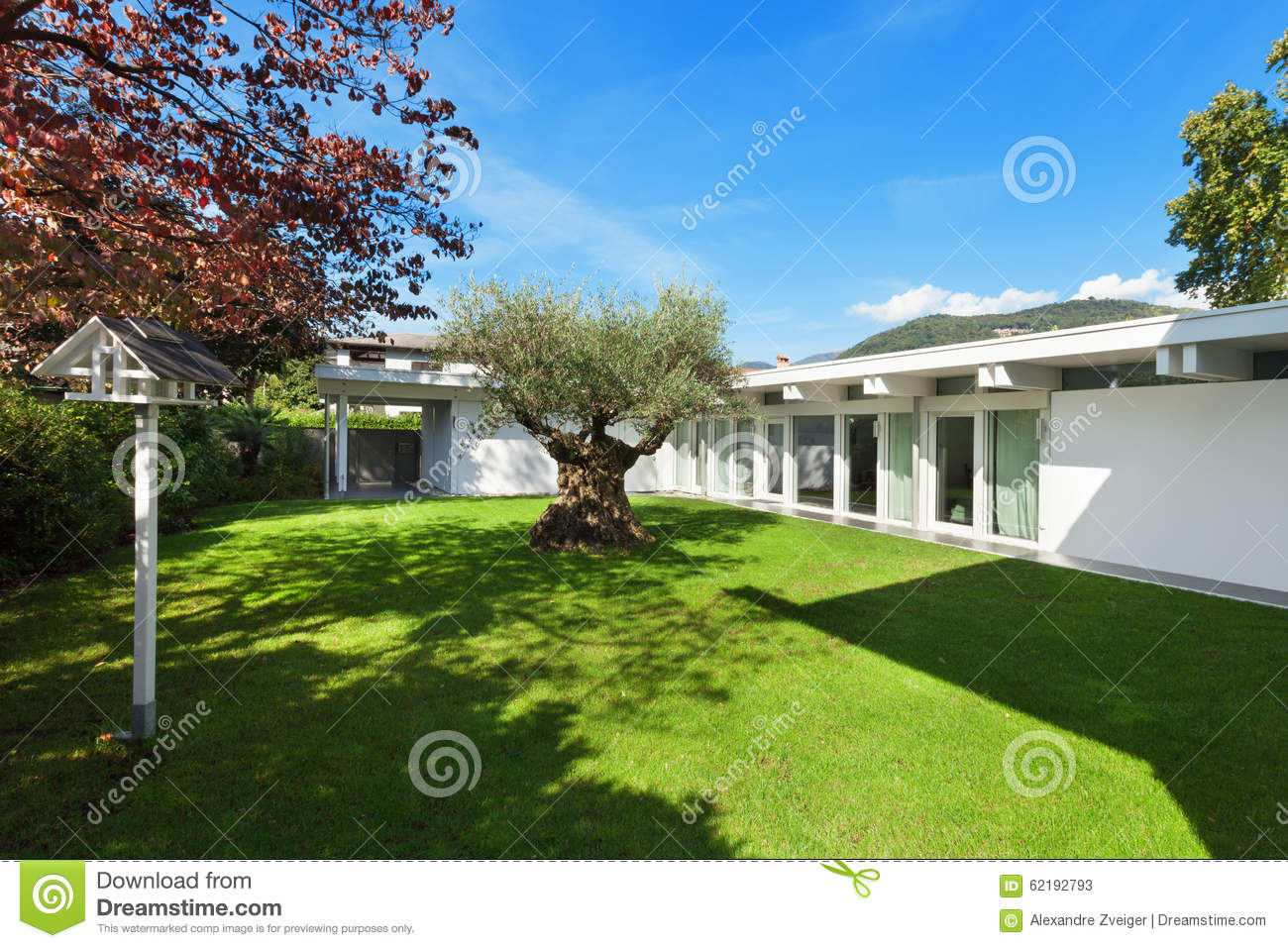 Garden of a modern house with olive tree stock image for Modern house garden