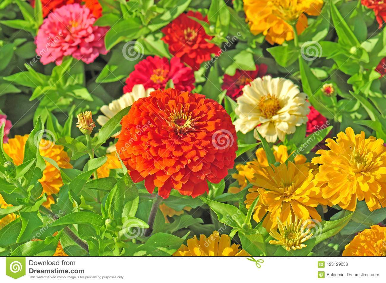 Garden With Multicolored Flowers Stock Image - Image of flowers ...