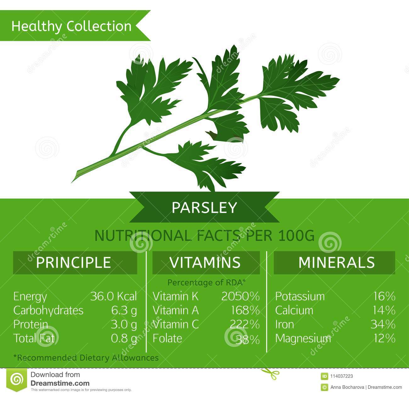 b15722781a7 The garden parsley health benefits. Vector illustration with useful  nutritional facts. Essential vitamins and minerals in healthy food.
