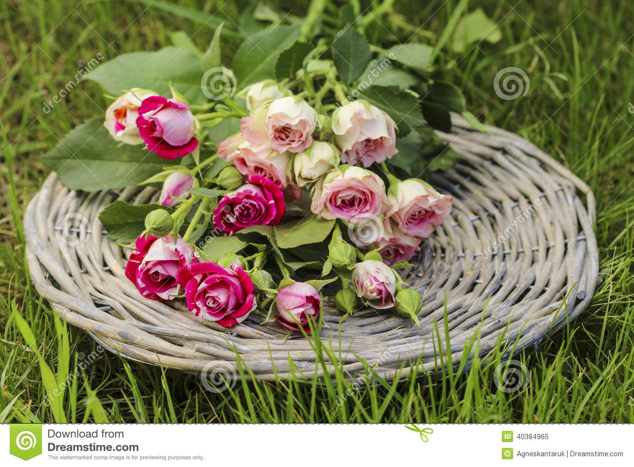 Garden Party Decor. Bouquet Of Pink Roses On Wicker Tray Stock Image ...