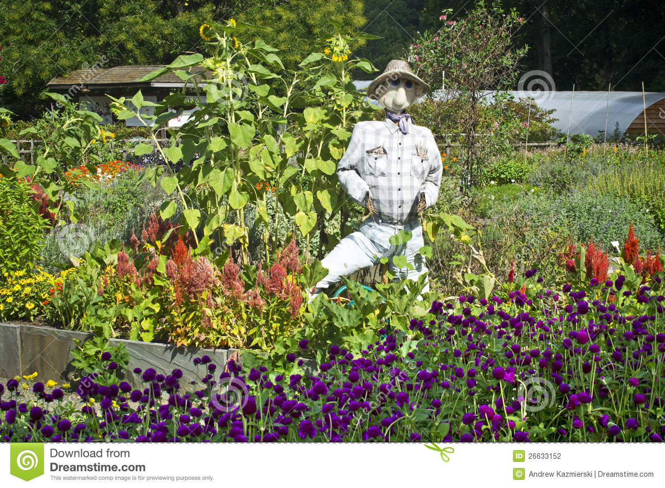 Garden Patch Scarecrow Stock Photography Image 26633152