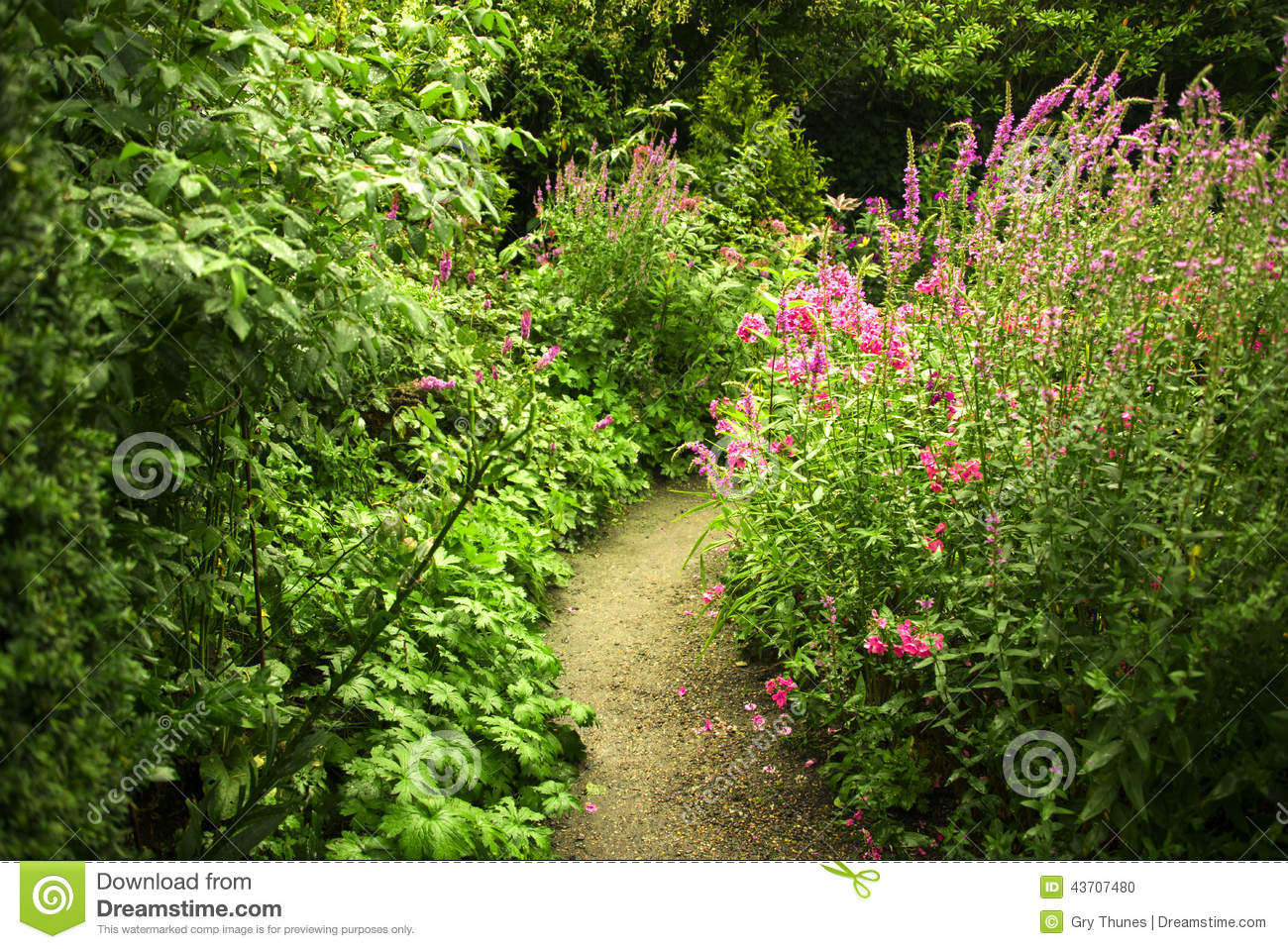 Garden path amidst pink and purple flowers stock photo for Small garden flowers