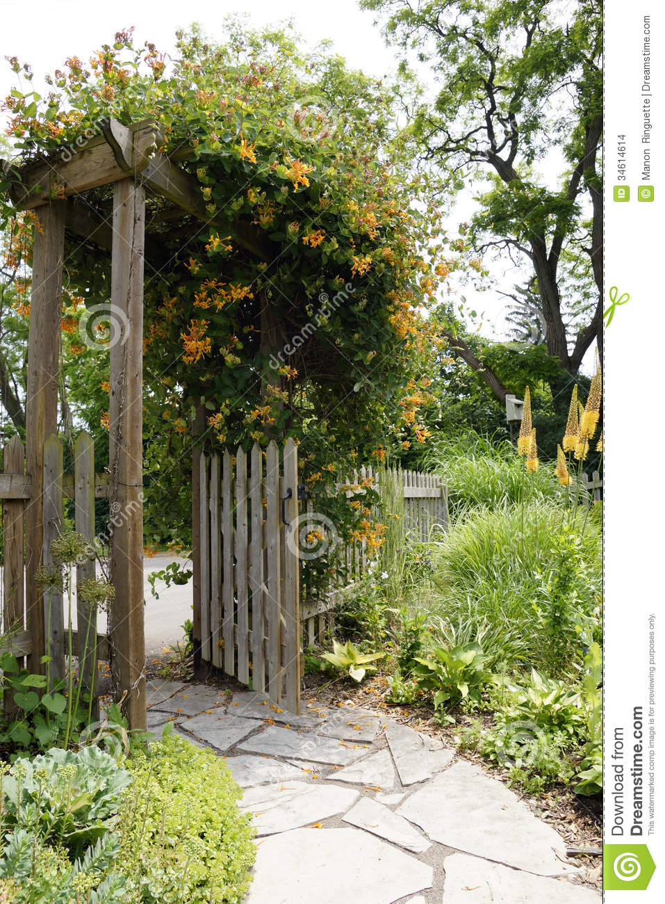 Garden Path And Gate Stock Photo Image Of Picket Plants