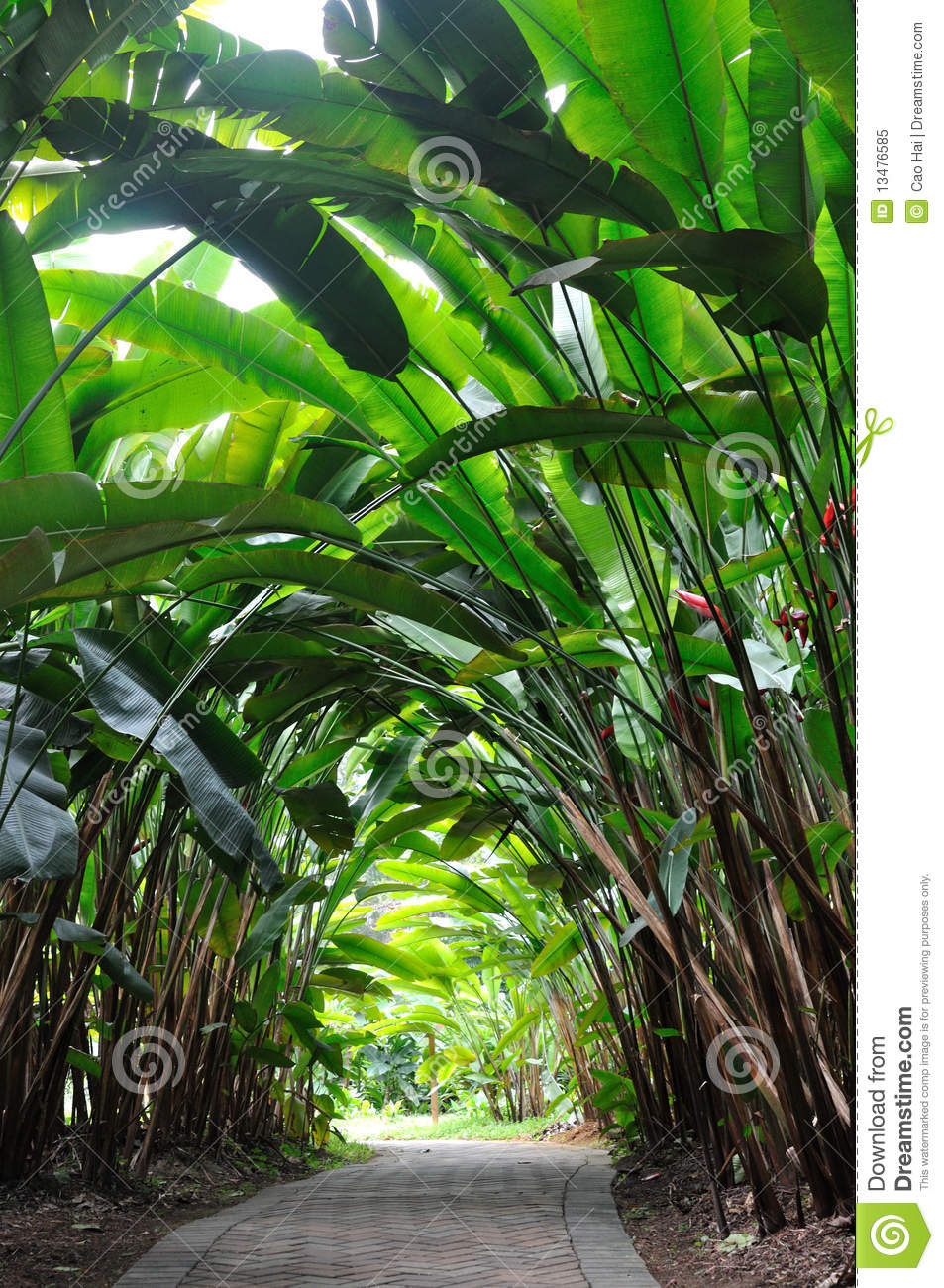Garden path in Heliconia woods