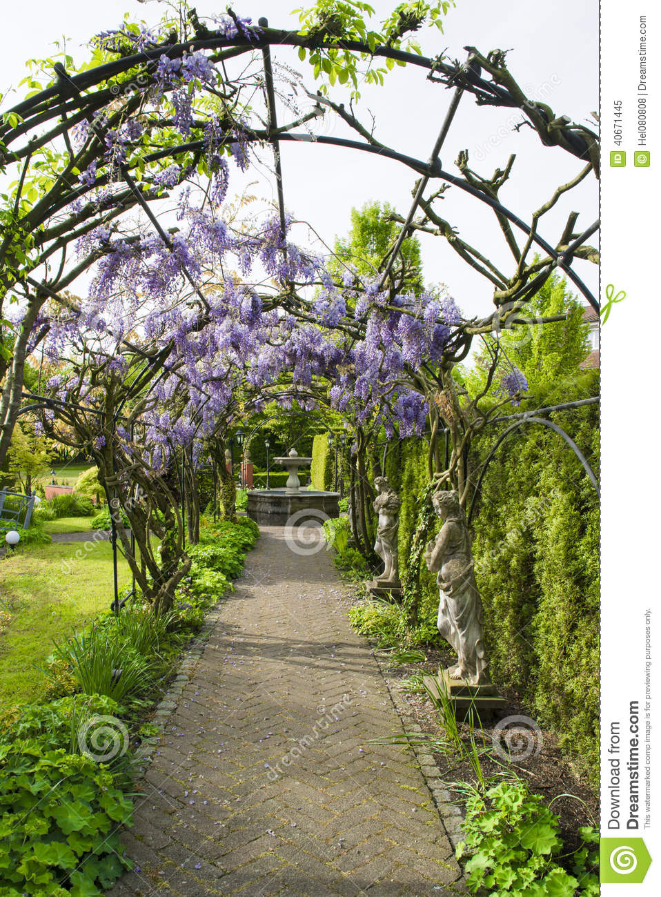 Wisteria Arches stock image. Image of arches, green, path ...